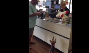 ぬいぐるみを買ってもらい、人間の子どものように喜ぶ子犬がむちゃくちゃかわいい!!