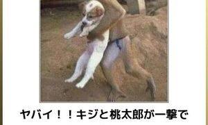 【動物編】写真で一言ボケるウェブサービス「ボケて(bokete)」傑作選