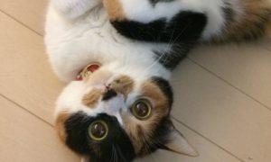 つらいニュースが多い今こそタイムラインに猫を流そう