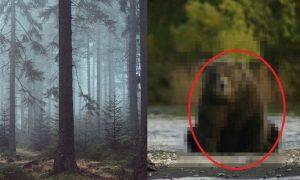 【※衝撃展開※】俺が昔山で遭難した時に熊に助けられた話をしたい。