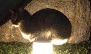 何かと使い方を間違えてる猫がおもしろカワイイ(=^・^=)