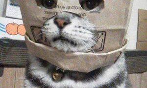 「ちょ…w」ってツッコみを入れざるを得ない『猫』たち