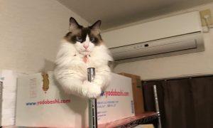 地震発生!「猫は大丈夫か!?」と思って見たところ…