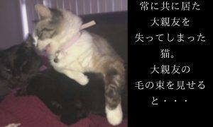 【※涙腺大崩壊※】常に共に居た大親友を失ってしまった猫。大親友の毛の束を見せると・・・