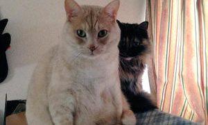 変わった座り方をする猫がけっこういたw
