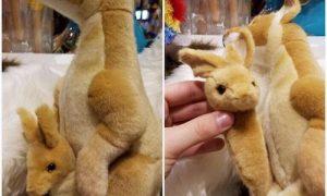 「このカンガルーのおもちゃは…」何かがおかしい!笑っちまった(笑)