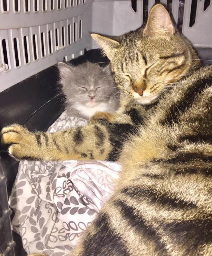 寄り添う猫と子猫