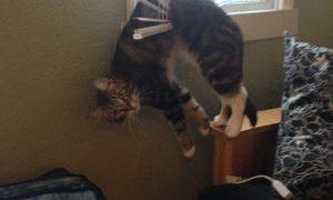 どうしてそこに!?身体能力のスゴさを見せつける猫たちw